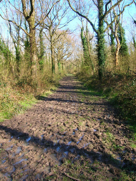 449px-Footpath,_Tottington_Wood_-_geograph.org.uk_-_757070