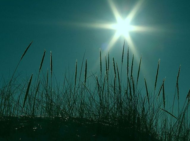 Starburst_and_Beach_Grass_On_Turquoise_free_creative_commons_(2292064768)