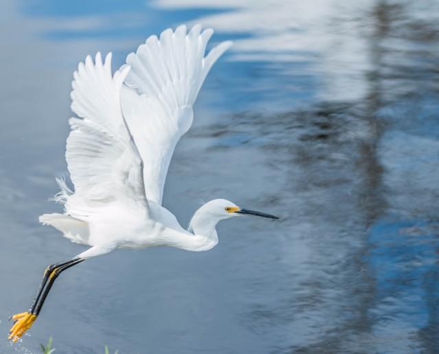 bird-1417209351FgJ