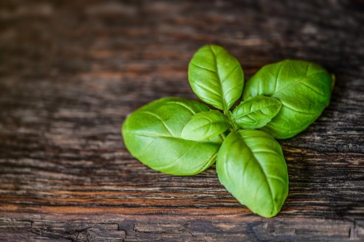 basil-leaf-herb-15262121092Zf