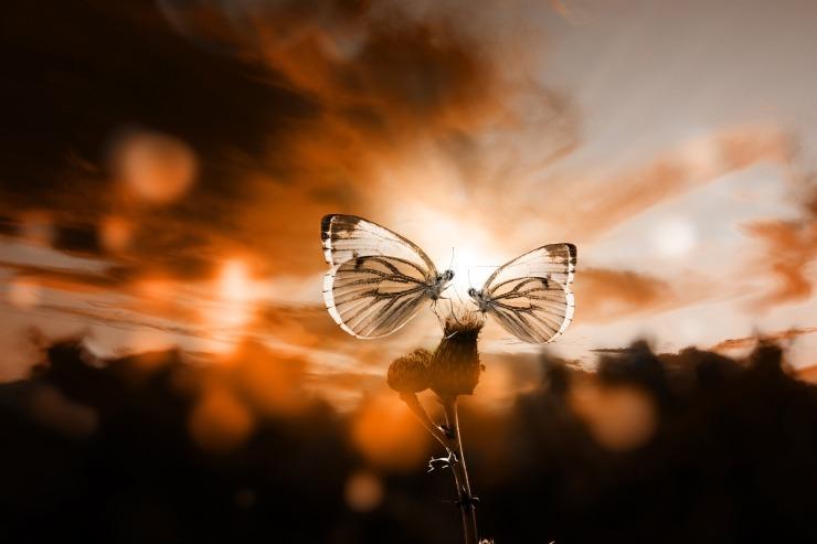butterfly-3499055_1920