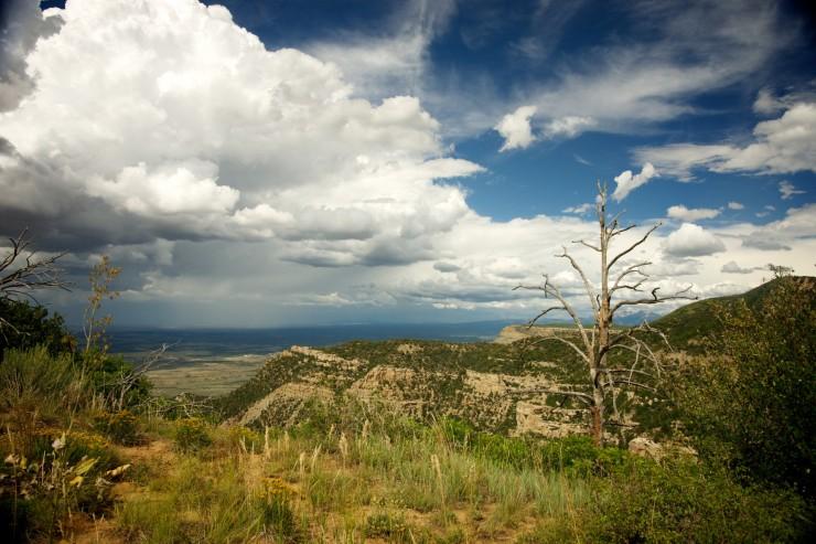 dead-tree-in-southwest